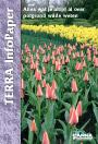 Terra Infopaper