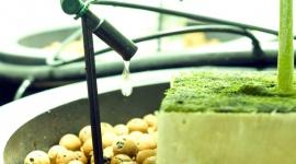 Gebruik van run-to-waste-systemen met inerte substraten
