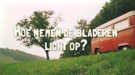 Afl. 2 Hoe nemen de bladeren licht op? - Tips & Tricks door Bart