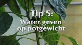 Afl. 5 Water geven op potgewicht - Tips & Tricks door Kees