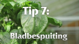 Afl. 7 Bladbespuiting - Tips & Tricks door Kees